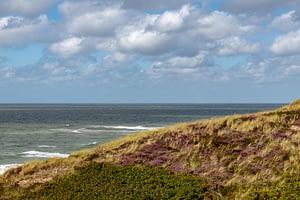 Heidelandschaft-und-Meer-auf-Sylt-bei-40-mm